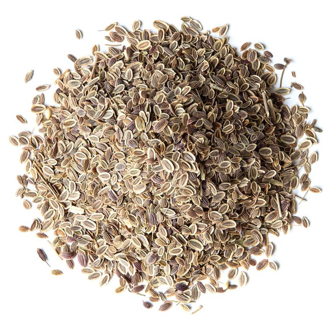 conventional-dill-seeds-main