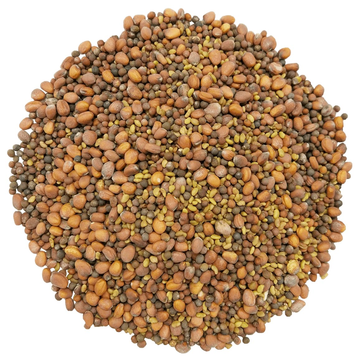 Spicy Sprouting Seeds Mix