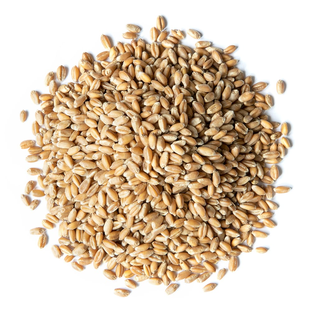 organic whole wheat berries