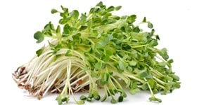 Types of Sprouts and Many Health Benefits They Offer