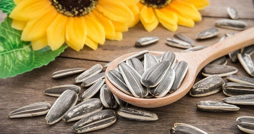 Sunflower Seeds as a Delicious Food Product