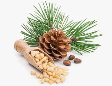 Pine Nuts: Health Benefits, Cooking, and Storage Tips