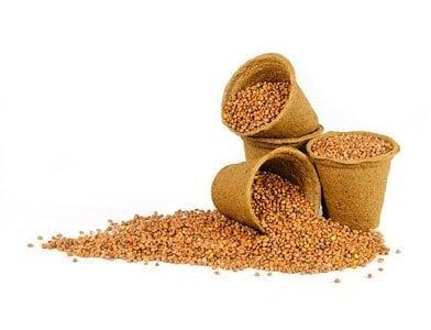 Radish Seeds: a Potent Medicine and a Nice Seasoning