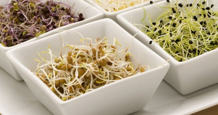 Health Benefits of Eating Sprouts for Your Hair