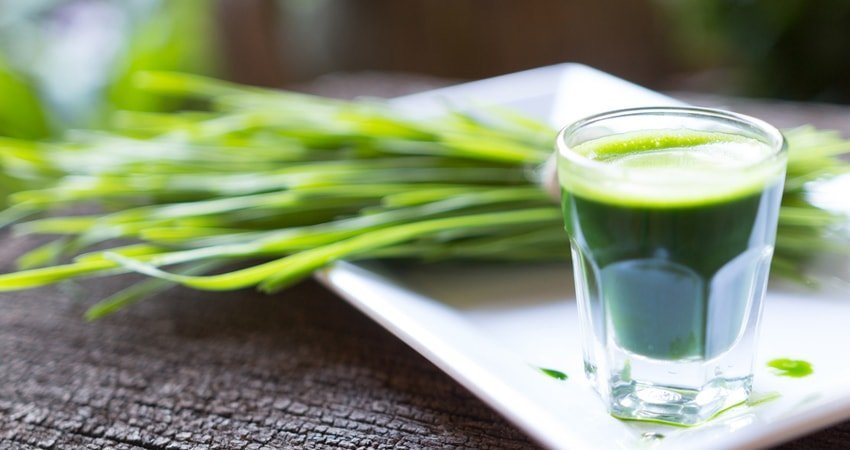What Does Wheatgrass Do? 5 Essential Health Benefits of Wheatgrass