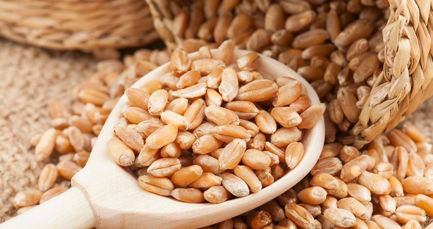 How Whole Wheat Grains Can Improve Your Health