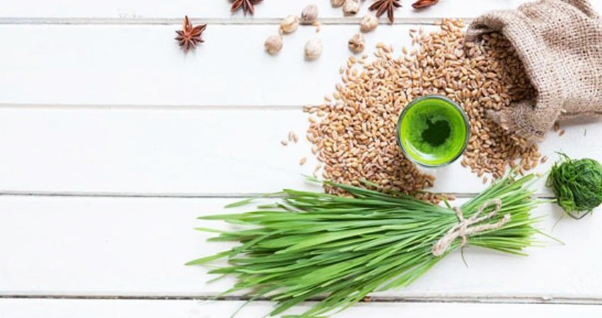 Does Wheatgrass Have Gluten?