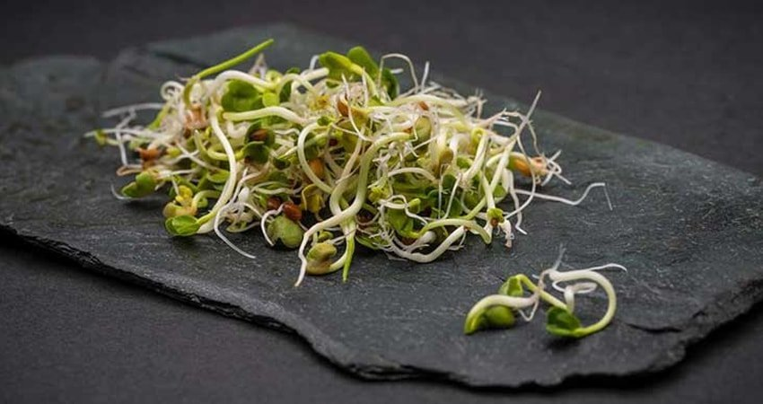 Health Benefits of Wheat Sprouts