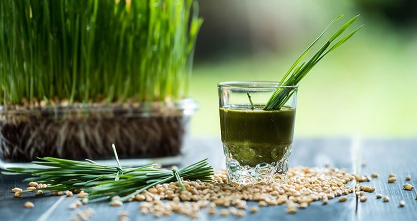 How to Make Wheatgrass Juice