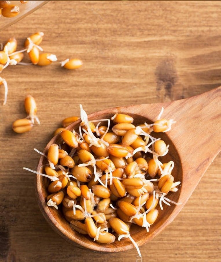 Wheatgrass Seeds Whole Foods