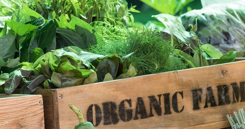 Personal Health and the Environment: Benefits of Organic Farming
