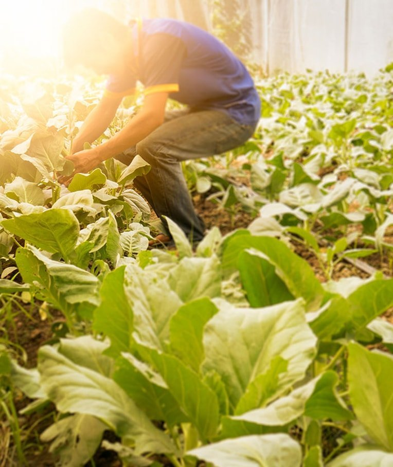 What Is an Organic Farm and How Does It Work