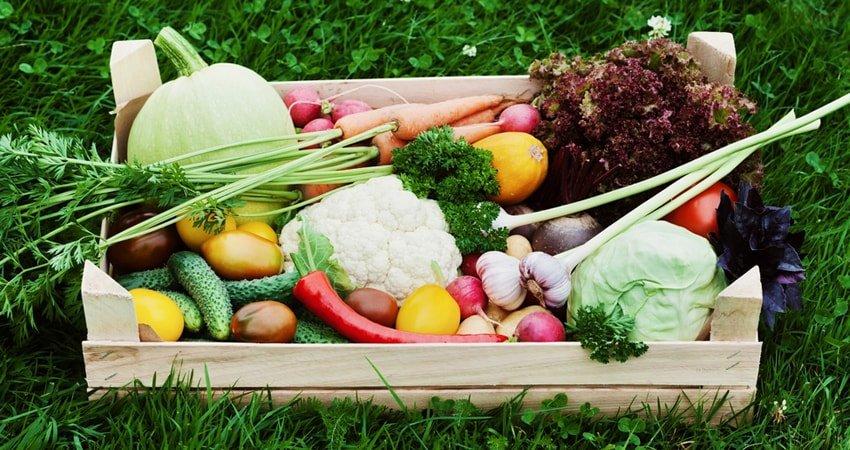 Is Organic Food Healthier Than Regular Food