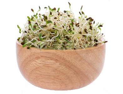 Effective Tips for Safe Sprouting at Home