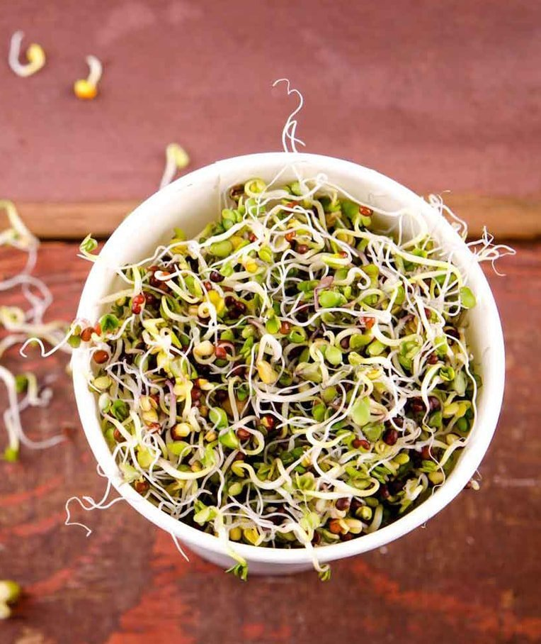 Best Alfalfa Sprout Recipes for Any Taste