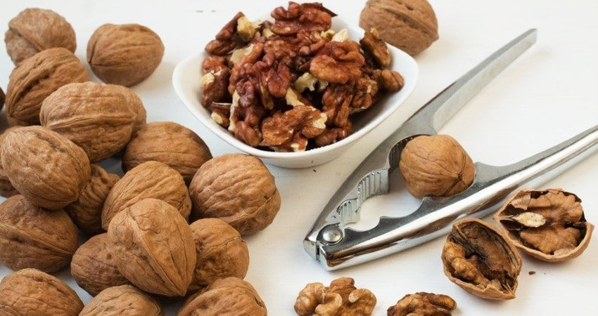 Walnuts are not only the best but also the oldest nuts