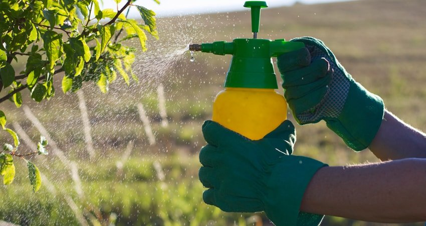 Dangers of Pesticides in Food for Human Health