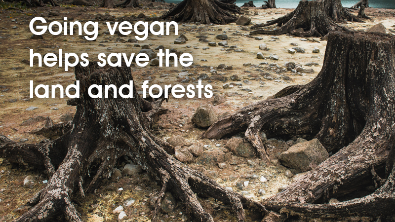 Going vegan helps save the land and forests