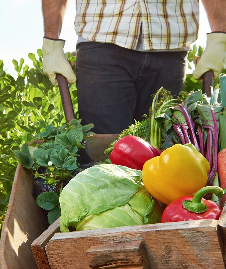 How Organic Food Production Works in the US