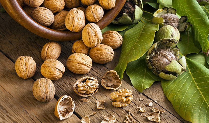 The Origin of Walnuts