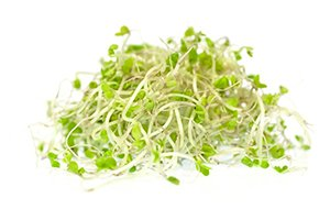 How to Sprout at Home and the Benefits of Having an Indoor Sprouts Garden