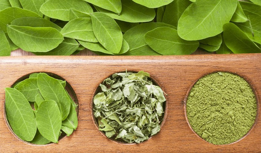Moringa Powder: Benefits, Nutrition And Uses