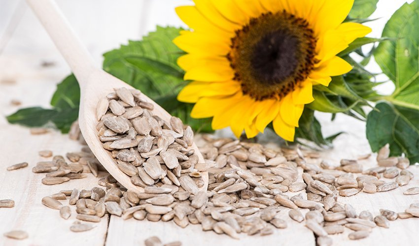 Are Sunflower Seeds Keto