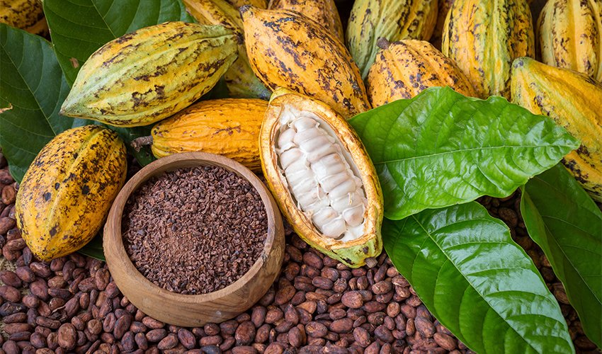 Cacao Beans: Health Benefits and Ways To Use