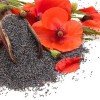 Poppy Seeds (England)
