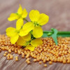 Mustard Seed Health Benefits and Uses: A Healthy Addition to Your Pantry