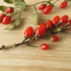 Healthy Eating: How to Dry, Use, and Enjoy Goji Berries