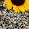 Sunflower Seeds: Are They Good for You?