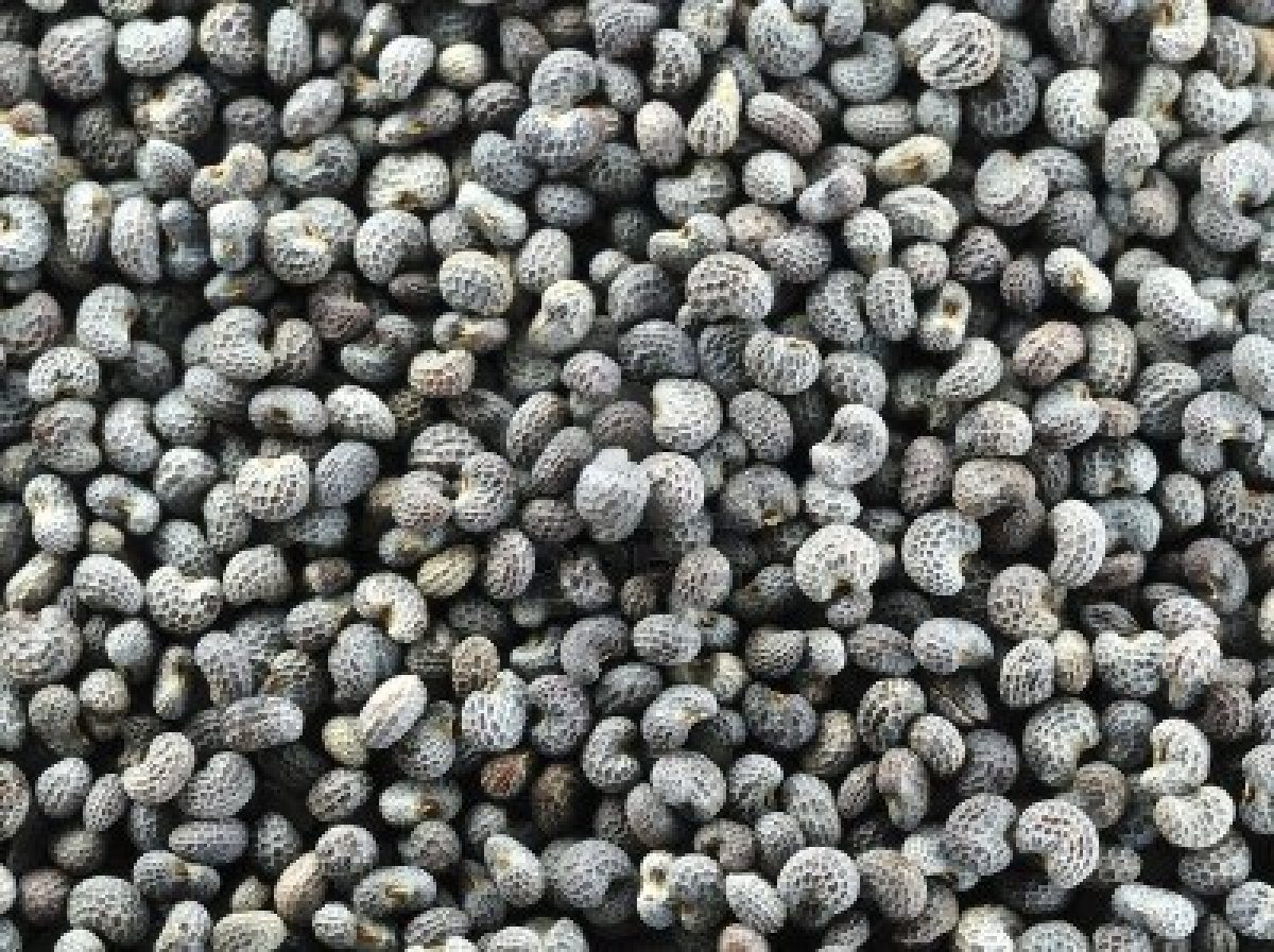 english poppy seeds buy english poppy seeds in bulk from food to live