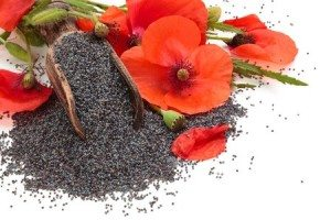 Spanish poppy seeds buy spanish poppy seeds in bulk from food to live roll with poppy seeds rated 490 out of 5 based on 10 customer ratings mightylinksfo