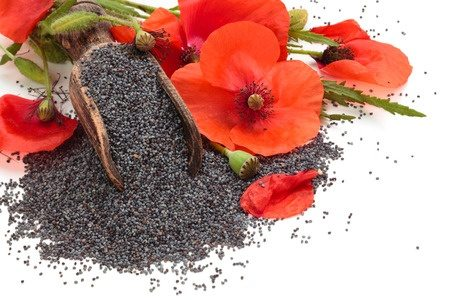 Poppy seeds spain buy poppy seeds spain in bulk from food to live poppy flowers and poppy seeds mightylinksfo