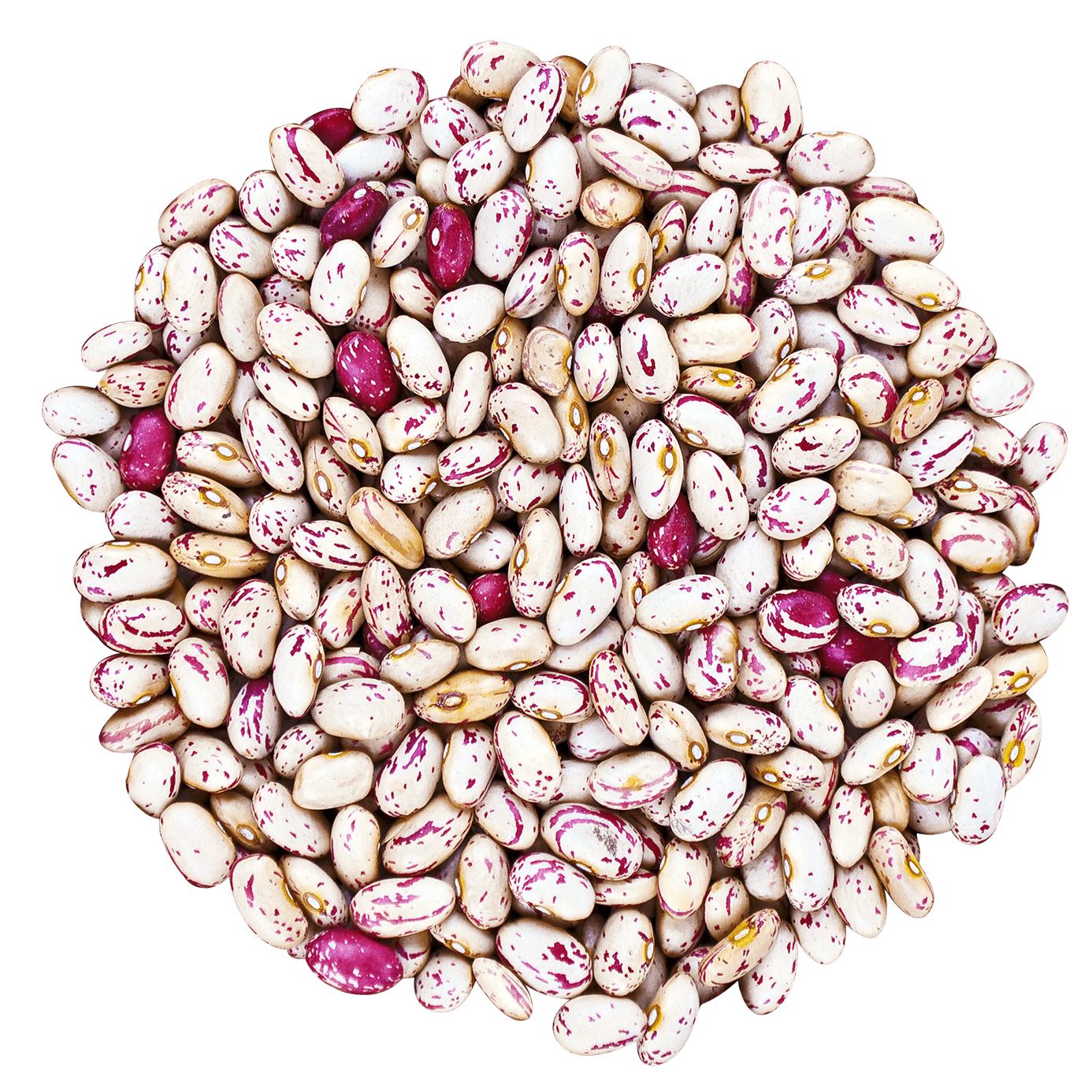 Cranberry Beans without bag