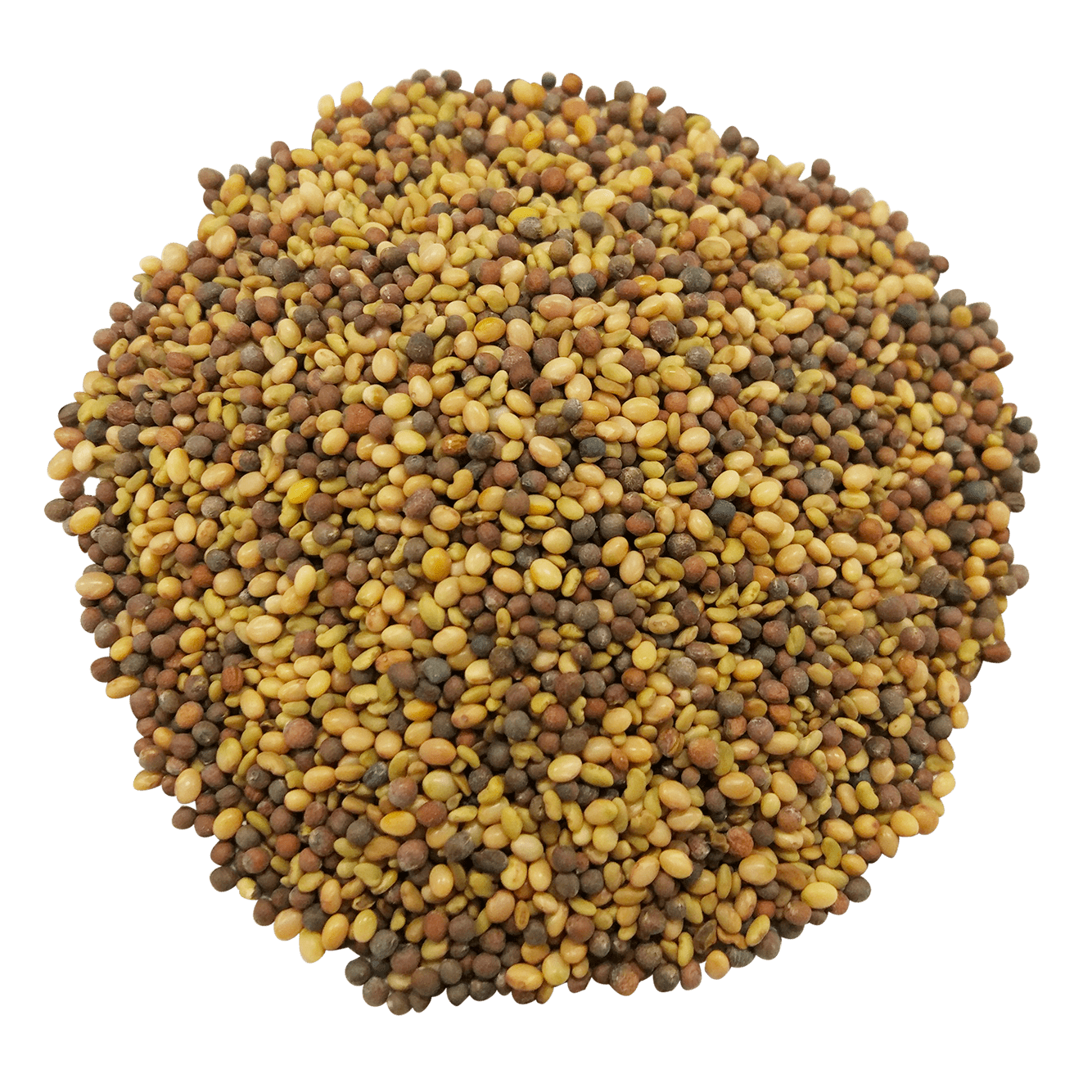 Antioxidant Sprouting Seeds Mix