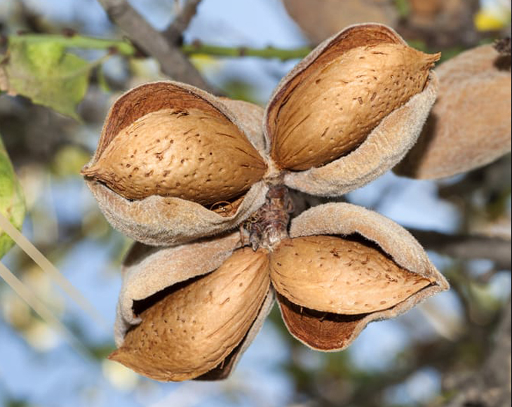 Whole Blanched Almonds Buy in Bulk from Food to Live