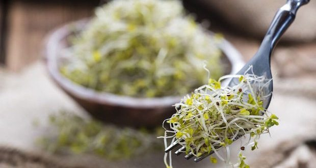 a fork of wonderful broccoli sprouts