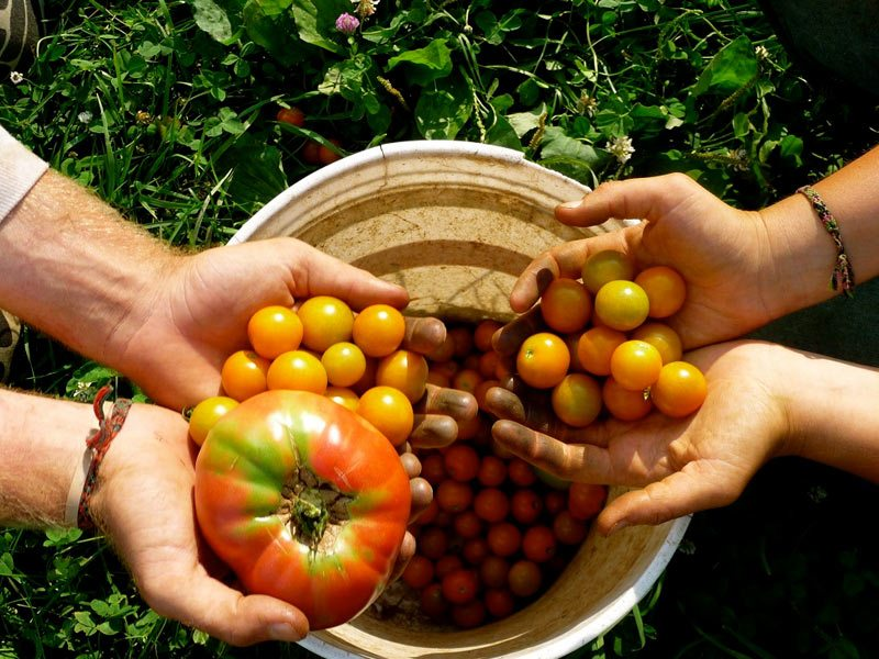 the results of organic farming
