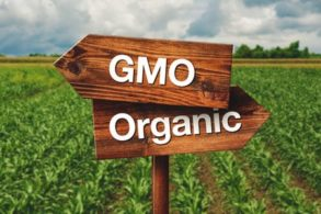 GMO Organic signs on a field